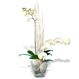 -105-Designers Orchidee