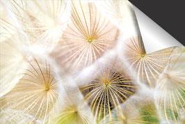 Dandelion Inductie Beschermer