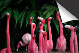 Flamingo Inductie Beschermer