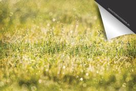 Gras & Dauw-Douwe-Inductie Beschermer