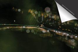 Spin Ragfijn-Douwe-Inductie Beschermer
