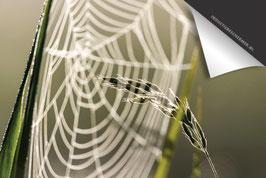 Spinnenweb Dag-Douwe-Inductie Beschermer