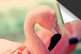 Roze Flamingo Inductie Beschermer