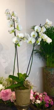 Orchidee in rustikalem Topf