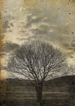 Lone sepia tree