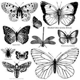 IOD Decor Stempel Butterflies
