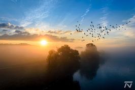 Sonnenaufgang bei Nebel (Winzer)