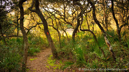 Trail in Ocala Oak Hammock