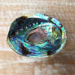 Abalone Muschel grün
