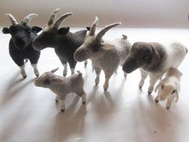 Schaf & Ziege