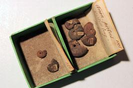 """""""Ammonites pictus"""" & """"Ammonites calcar cristatus(?)"""""""