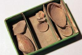 3 Muschelarten in historischer Schachtel