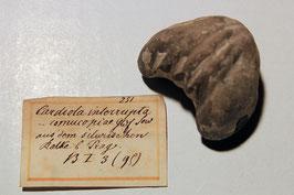 4 Brachiopoden-Arten (7 Exemplare)