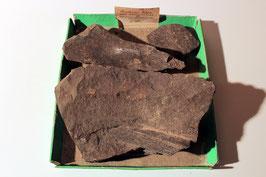 """""""Knochen & Rippe eines Ichthyosaurus"""""""