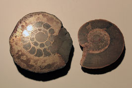 2 polierte Ammoniten (ohne Zettel)
