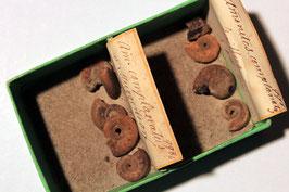 "2x ""Ammonites complanatus"""