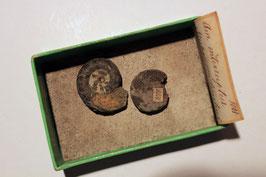 """""""Ammonites interruptus"""" (historische Stücke)"""