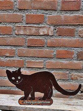 Gattino testa voltata