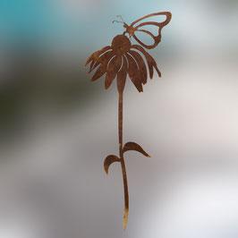 Farfalla su echinacea