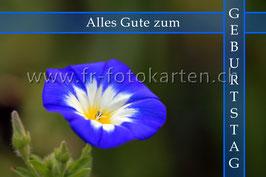 Geburtstag Blume blau / Karten Nr.1141FR