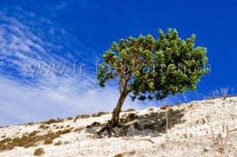 Baum / Karten Nr.1075MA