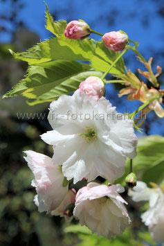 Blühender Baum / Karten Nr.1037FR