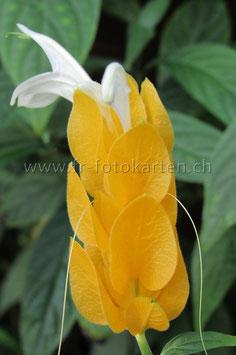 Gelbe Blüte / Karten Nr.1012FR