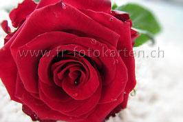 Rote Rose / Karten Nr.1001FR