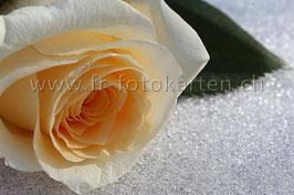Rose im Schnee / Karten Nr.1008FR