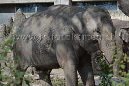 Elefant / Karten Nr.1005RR