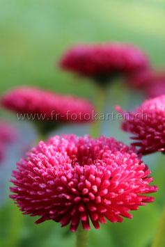 Blume in Pink / Karten Nr.1041FR