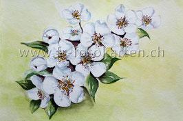 Weisse Blumen / Karten Nr.1125AC