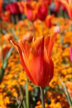 Mitten im Blumenmeer / Karten Nr.1039FR