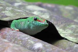 Gecko / Karten Nr.1006FR
