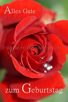 Geburtstags Rose / Karten Nr.1106RR