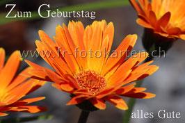 Geburtstags Gerbera / Karten Nr.1108FR