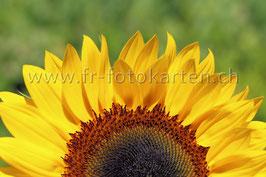 Sonnenblume halb quer / Karten Nr.1066FR