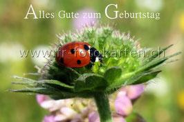 Geburtstags Marienkäfer / Karten Nr.1105FR