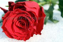 Rote Rose auf Schnee / Karten Nr.1137FR