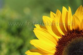 Sonnenblume viertel / Karten Nr.1068FR