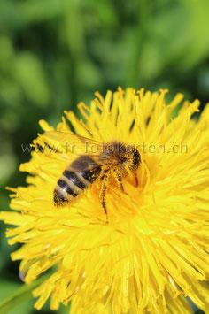 Biene / Karten Nr.1021FR