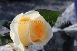 Rose auf Steinen / Karten Nr.1010FR