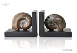 FOSSILINE  SET OF  BROWN BOOKENDS