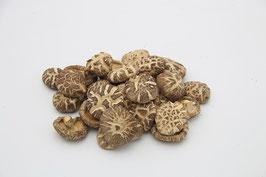 Shiitake Lentinula edodes