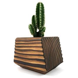 1 Kaktus + Topf aus Holz – El Cactus 1.0 - El Palo Germany