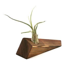 Luftpflanze + Topf aus Holz – Toco 1.0 - El Palo Germany