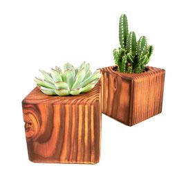 Kakteen und Sukkulenten Mix + 2 Töpfe aus Holz – El Cactus 4.0.2 - El Palo Germany