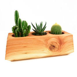 3 Kakteen + Topf aus Holz - El Cactus 3.1 - El Palo Germany