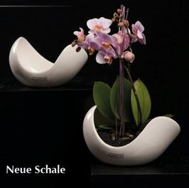 Schale Gazo flach creme 18 cm