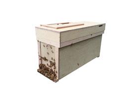 花粉交配蜂・種蜂 3枚有王群